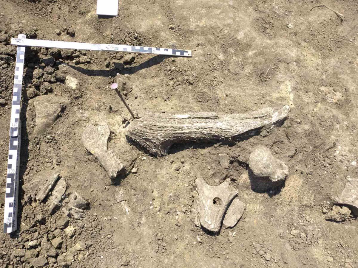 Foto von Funden mit Maßstab