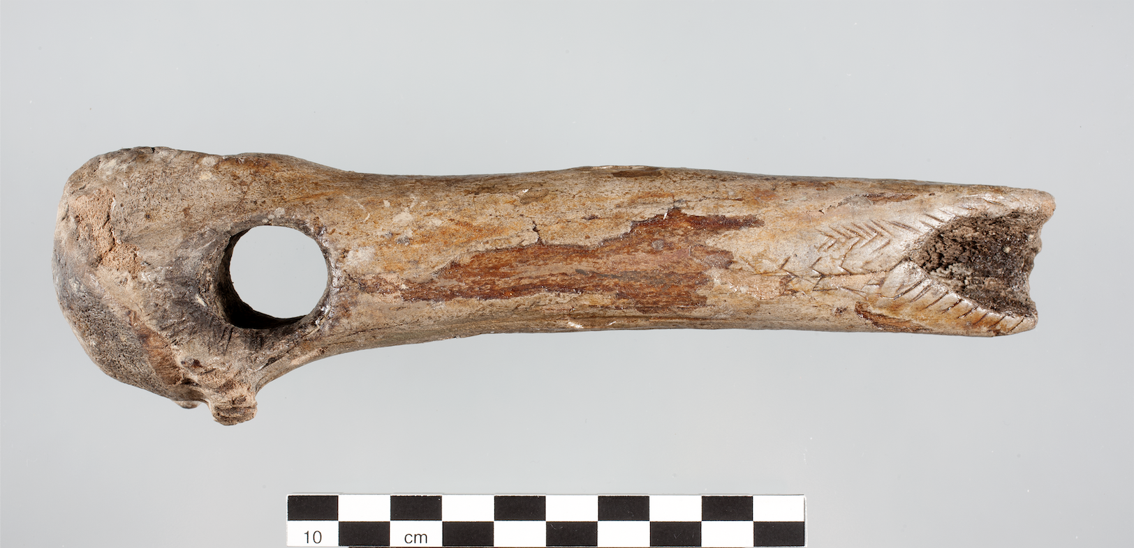 SFB1266 one of the dated Mesolithic antler axes from the site Travenhorst
