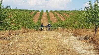 Geomagnetische Prospektion in Monte da Contenda zwischen Oliven- und Mandelplantagen
