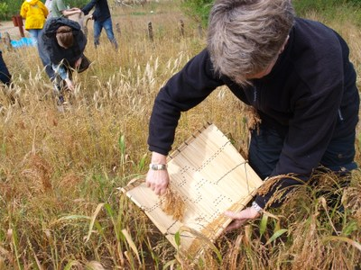 Harvesting cereals at AÖZA Photo by A. Hoffmann