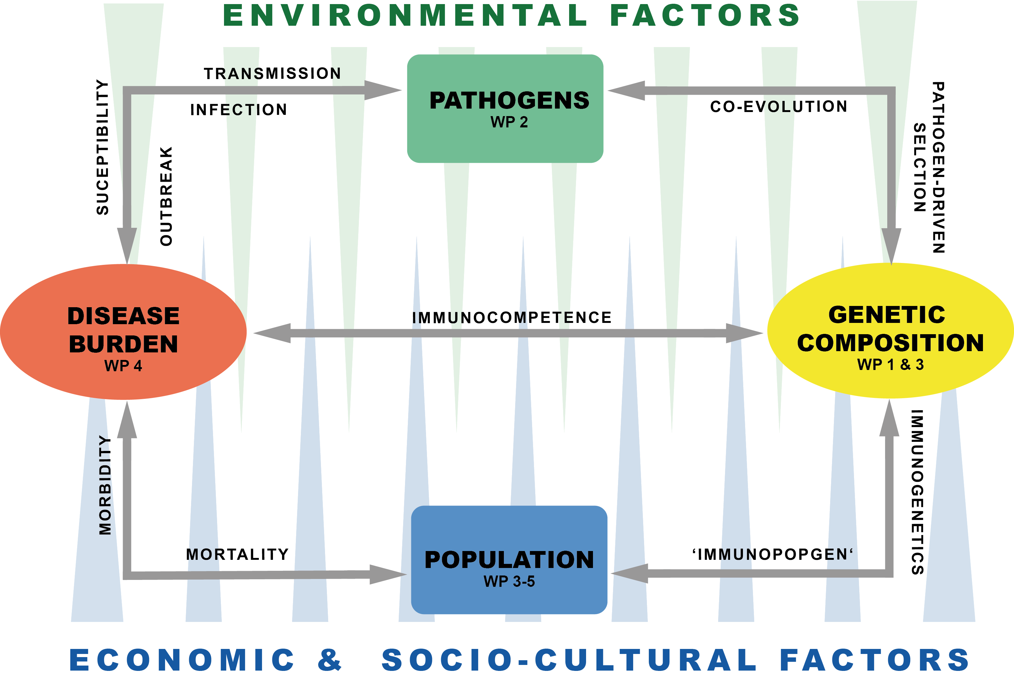 Wechselbeziehungen zwischen Mensch und Pathogen