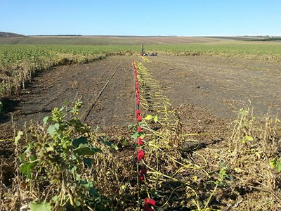 Conduction of electrical resistivity measurements in Stolniceni