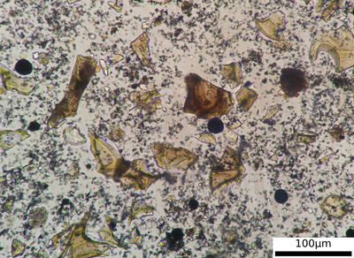 Volcanic glass shards of the early Holocene Saksunarvatn tephra layer from Lake Poggensee
