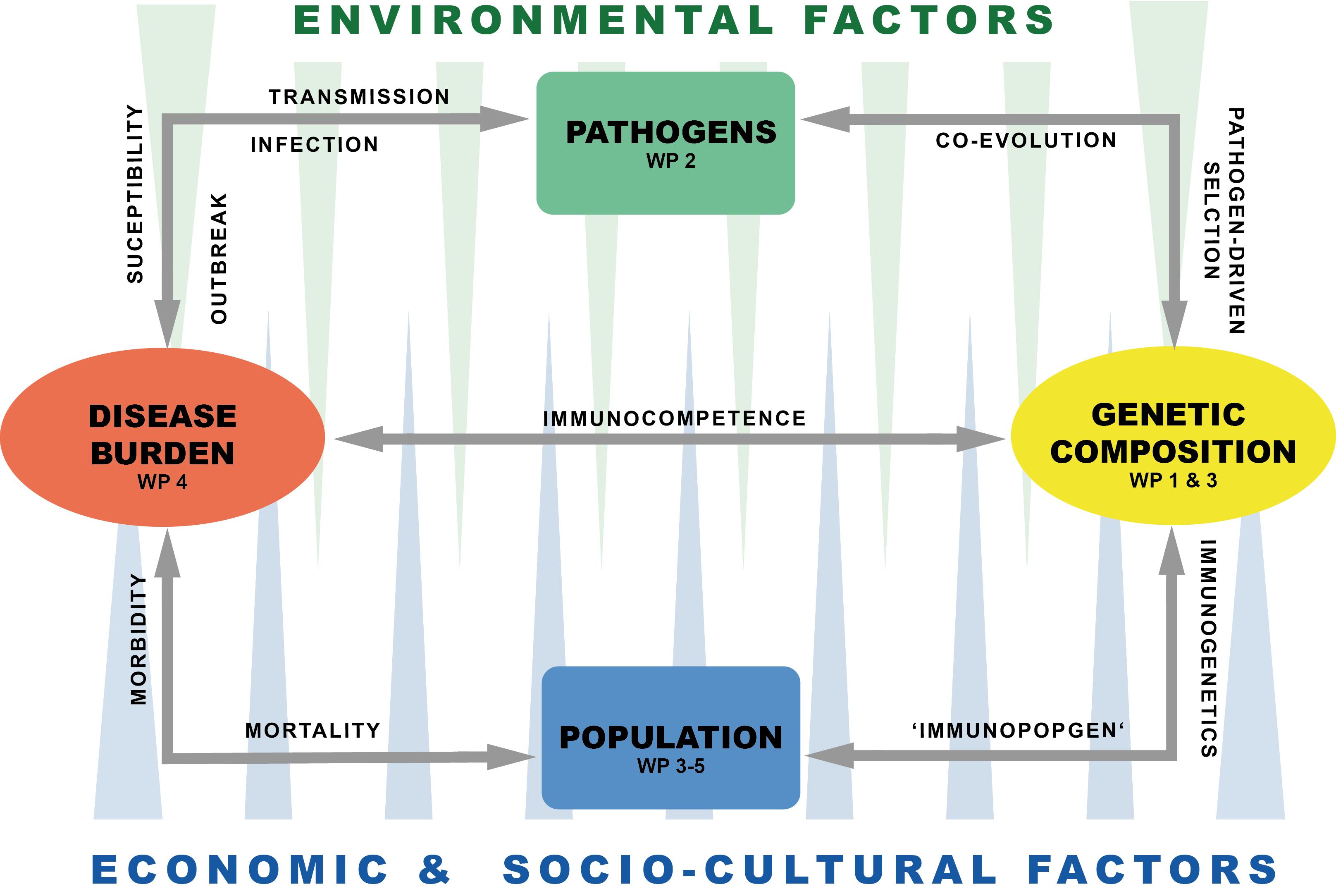 Interrelation between pathogens, disease burden and genetic composition of ancient populations