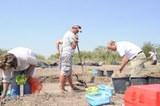 Feldarbeiten in Ungarn