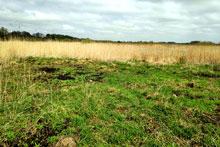 Blick auf die oberflächlich sichtbare Grabungsfläche aus den späten 1980er Jahren in Parchim-Löddigsee.