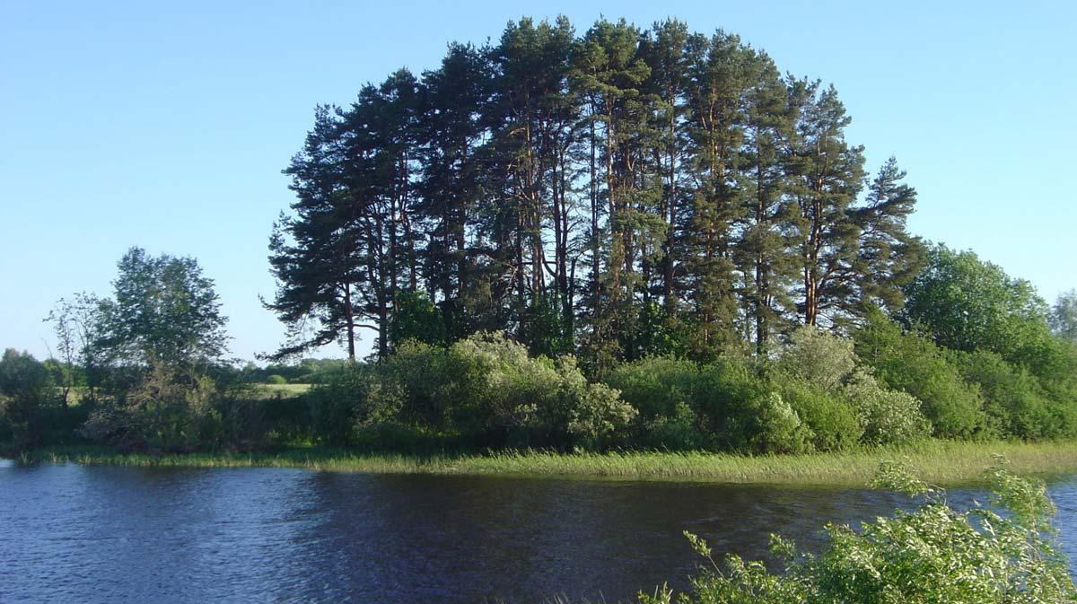 Sommerlicher See mit Baumgruppe