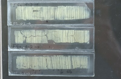 Thin sections of annually laminated lake sediments